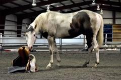 13_hands_equine-Anna-Twinney-Clinic-3