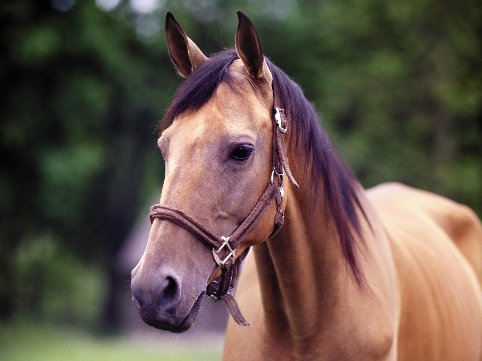 horse-418-2