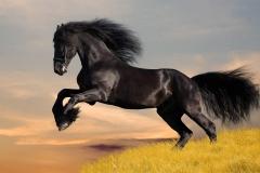 horse-07_(2)