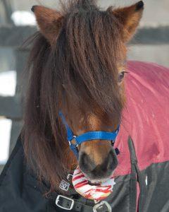 13 Hands Equine Rescue, Inc